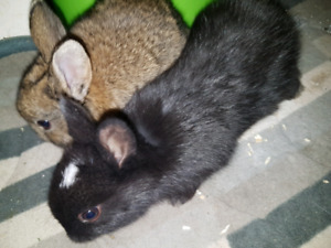 Big and small breeds of bunny rabbits