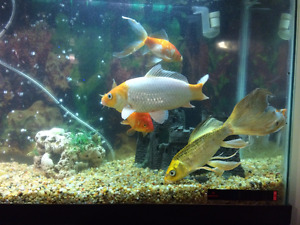 5 fish for rehoming FREE