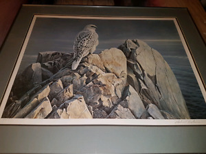 Robert Bateman - Evening Light White Gyrfalcon