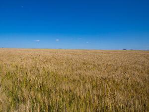 Selling 6 full quarters of high grade farm land Edmonton Edmonton Area image 1