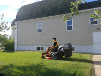 Lawn Cuts and maintenance