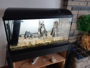 25 Gallon tank, top with light, filter, rocks and decorations.