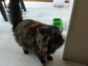 Mature cats free to a good home