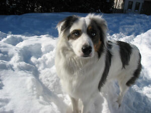 Chien toujours manquant - Dog still missing
