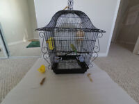 Yellow Parakeet with Blue Tail + Large Cage + 3 months food+toys