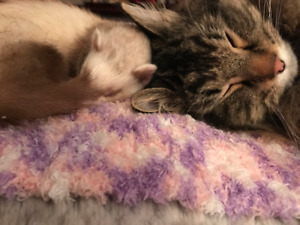 SEARCHING FOR ADOPTED CAT... Please Read!
