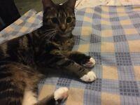 Missing cat name Chihiro last seen near Globe Road
