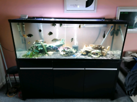 Aquarium 6ft by 2ft by 2ft