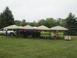 Mobile Petting Zoo for Birthdays/Seniors homes/Special events Peterborough Peterborough Area image 9