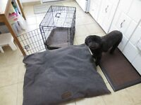 Dog Crate and Bed both in Excellent Condition