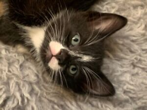 beautiful kittens need a new home