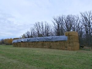 Hay... alfalfa and grass... good for horses, calves or cows