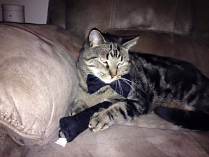 ***Asking for Assistance*** - Our cat Dexter needs surgery