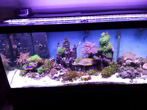 Selling 75 Gallon Tank, Stand, Corals, Fish, Accessories