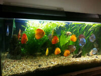 Discus and plants for sale