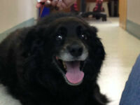 SENIOR DOG NEEDS HOME A HOME ASAP