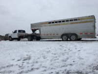 livestock trucking hauling moving transportation.cattle sheep