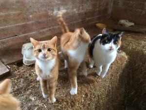 Beaux chats de grange à donner