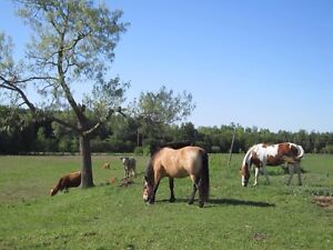 Maple Hill Farm : Horse Boarding available in 2017