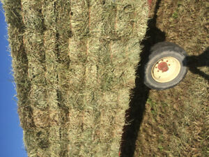 Hay & straw small square bales