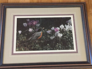 Art for Bird Lovers - Terry Issac - Signs of Spring