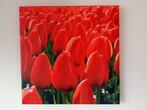 "Canvas Print, Photography, Red Tulips, 16"" x 16"""