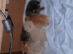 Kittens for sale to good home Windsor Region Ontario image 2