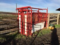 Reduced -> Sweet restored cattle squeeze
