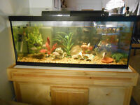 75G tank with wooden stand and cichlids
