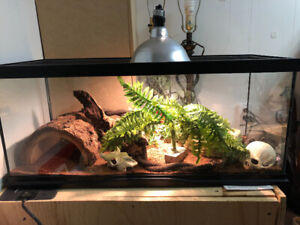 35-40 gallon Reptile tank with accessories for $230.00