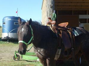 Antique  (Easy Rider) roping saddle