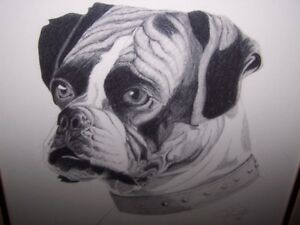PRINT OF A BOXER DOG,SIGNED/DATED by J.BRIGGS 1980.