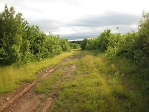 great 100 plus acres for hunting camp or cottage