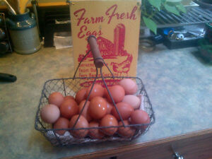 Farm Fresh Eggs and Honey London Ontario image 4