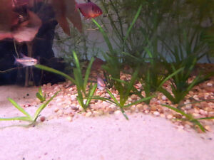 FISH, SHRIMP, SNAILS, PLANTS, LIVE FOOD +MORE
