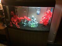 165L fish tank