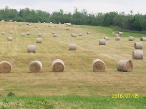 round baled hay for sale
