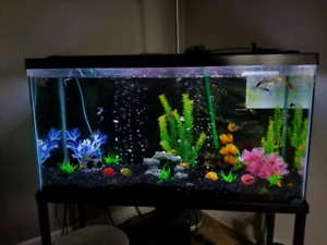 *MOVING* 32 Gallon Complete Setup *NEED GONE ASAP*