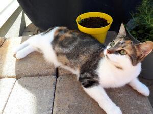 Lost Cat -  Greenboro/Hunt Club