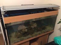 Marine Fish Tank Breakdown