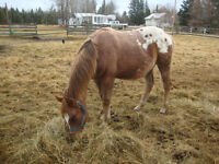 REGISTERED Beautifully marked yearling