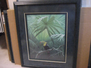 ROBERT BATEMAN UNDER CANOPY TOUCAN