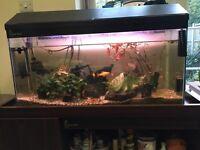 Fish Tank (with fish!)