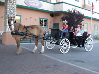 Draft Horse, Sleigh & Carriage Business Start Your Own Business