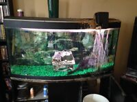 Beautiful good-sized curved front fish tank.