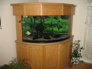 Aquarium de coin 90 gallons