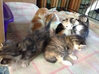 Gorgeous Kittens looking for loving homes!