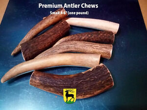 #1 Grade Antler dog chews Kitchener / Waterloo Kitchener Area image 4