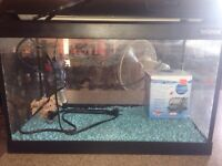 10 gal fish tank with filter, light and cover