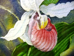 "Original Watercolor by Joan Tovey ""Lady's Slipper"" 1980's Stratford Kitchener Area image 2"